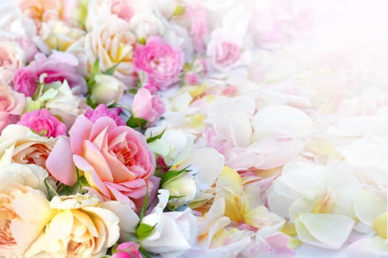 散落的花瓣和玫瑰花