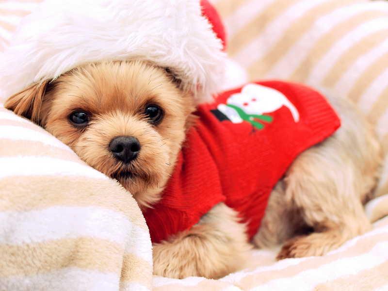 圣诞节快乐狗狗