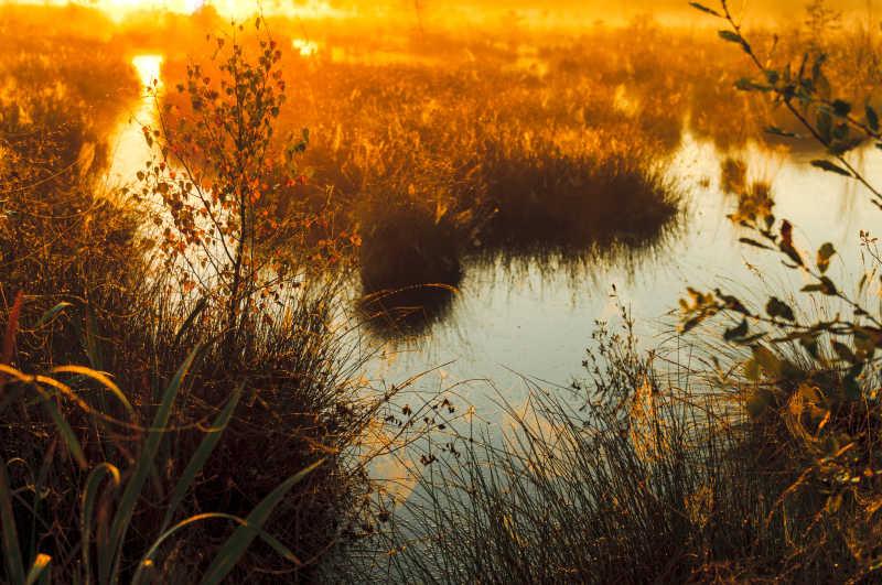 沼泽的独特日出