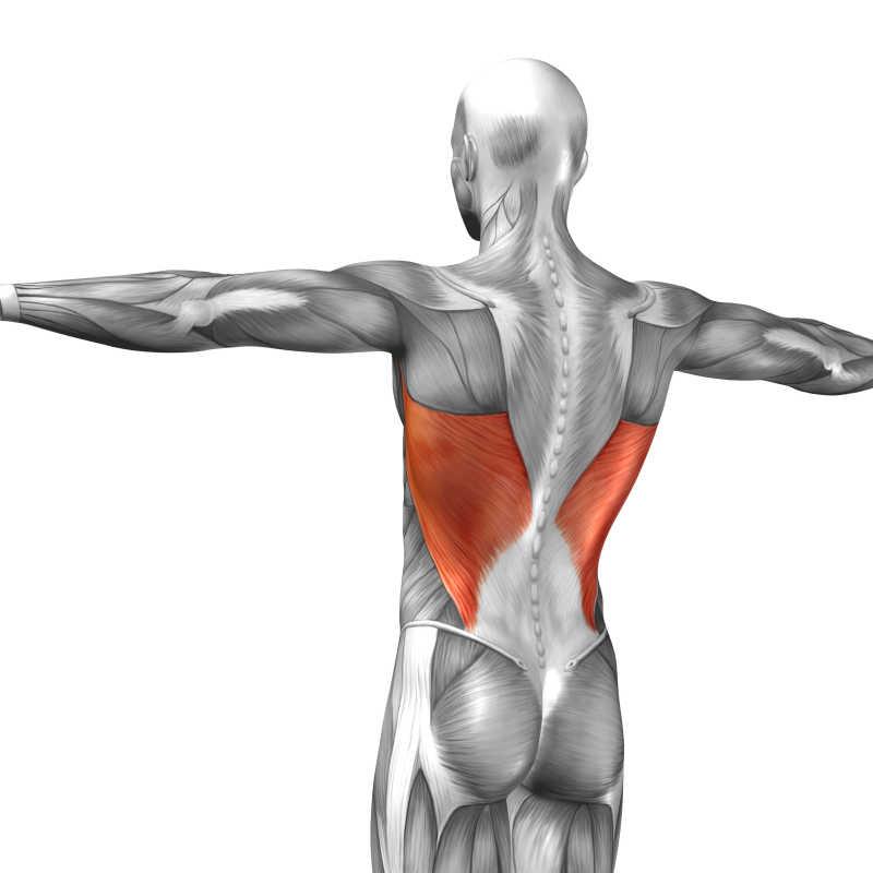 腓骨解剖图_立体肌肉图片-人体三维缝匠肌立体肌肉素材-高清图片-摄影照片 ...