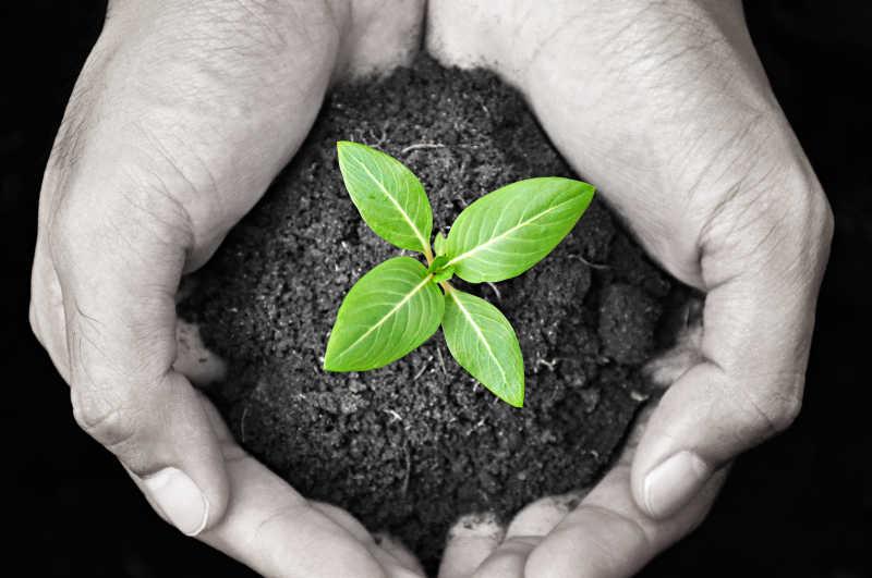 番茄树种子_植物发芽图片_豆类植物发芽素材_高清图片_摄影照片_寻图免费 ...