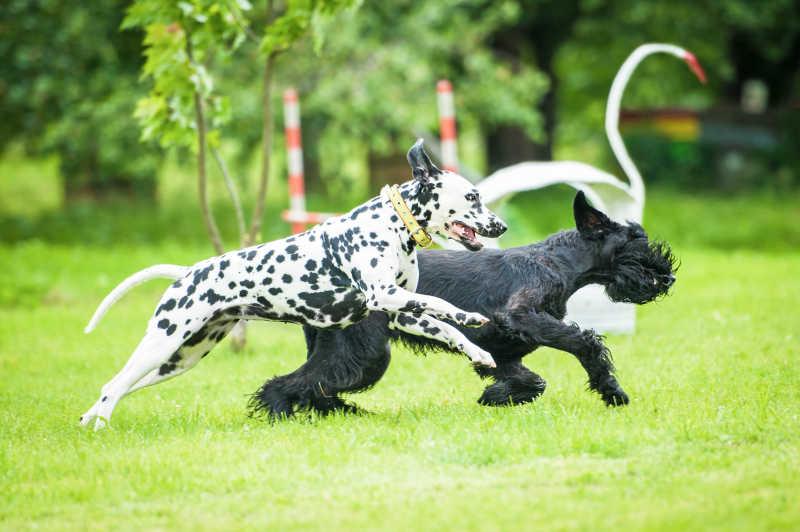 狗狗们在草地上奔跑