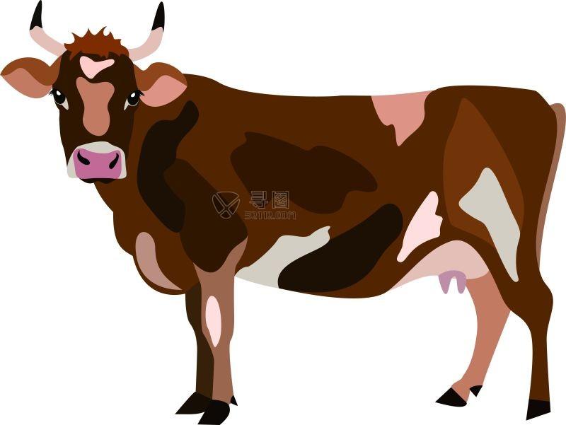 可爱的母牛