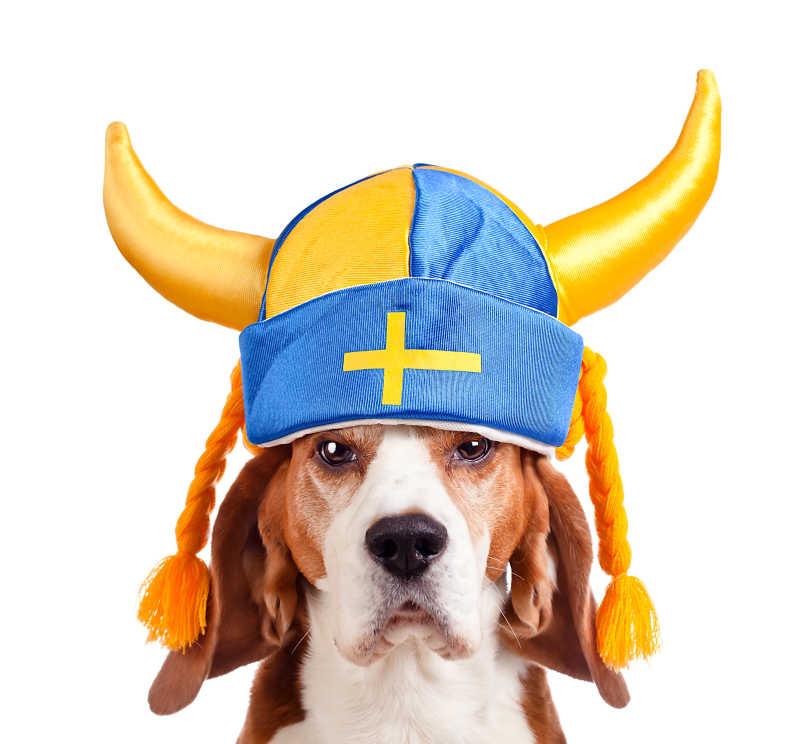 戴着帽子的比格犬