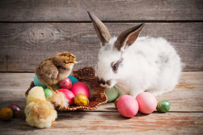 复活节彩蛋和可爱的小兔子小鸡特写