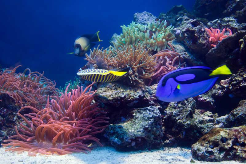 绚丽多彩的海底世界