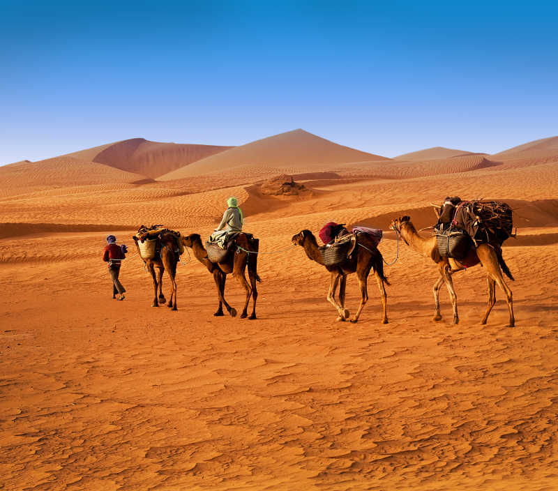 沙漠上的骆驼与人类