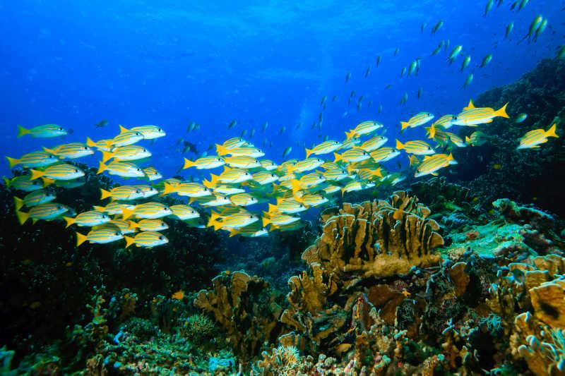海底世界美丽的珊瑚和鱼