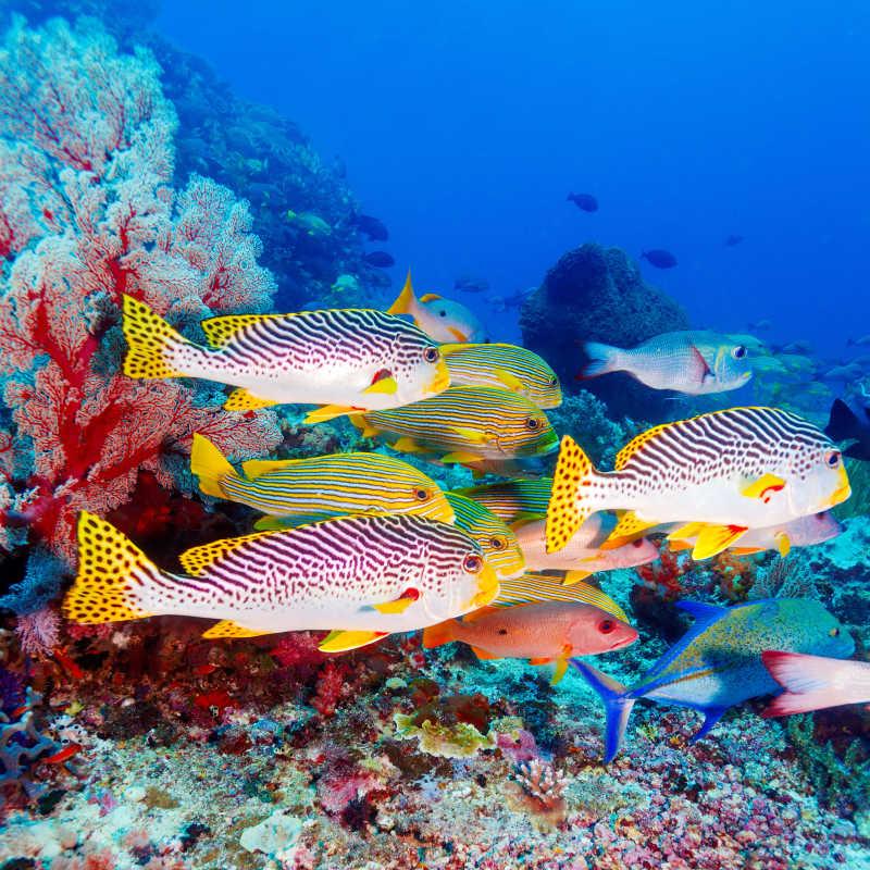 热带海底的珊瑚礁和鱼群
