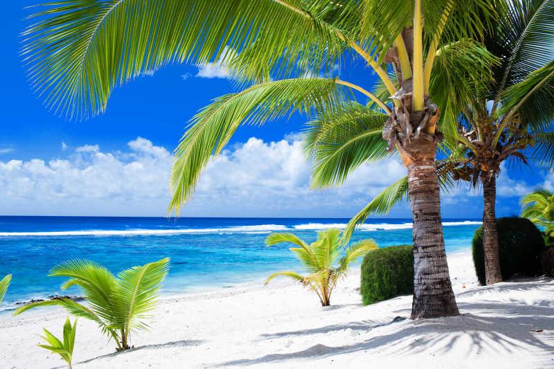 海灘棕櫚樹風景圖片_塞舌爾美麗的海灘風光素材_高清圖片_攝影照片_尋