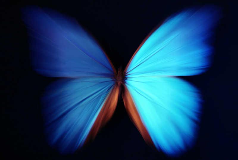黑色背景上的蓝蝴蝶