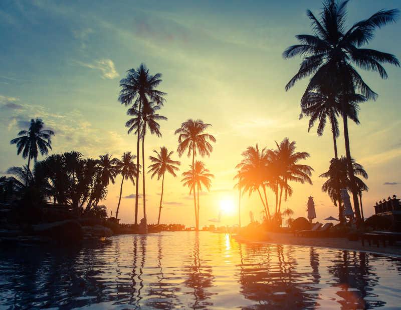 昏黄日落下的棕榈树