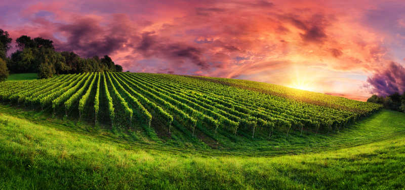 葡萄园中落日的壮丽天空