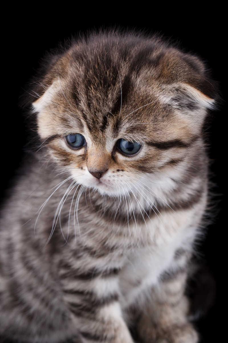 呆萌的小猫