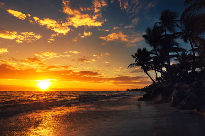 棕榈树在海边上图片素材_蓝天下海边上的棕榈树照片