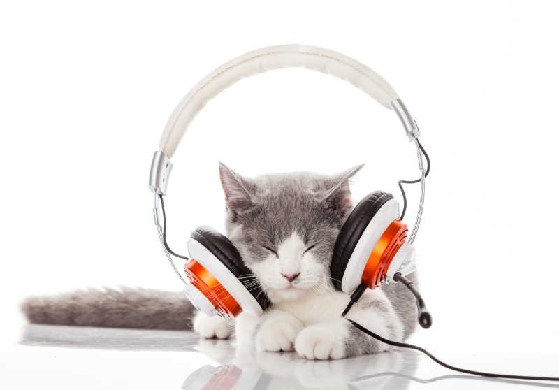 戴着耳机听音乐的猫咪