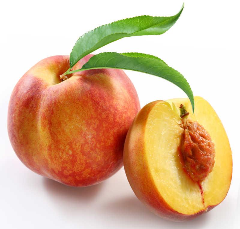 桃树图片素材_白叶桃树照片_jpg格式-未来素材