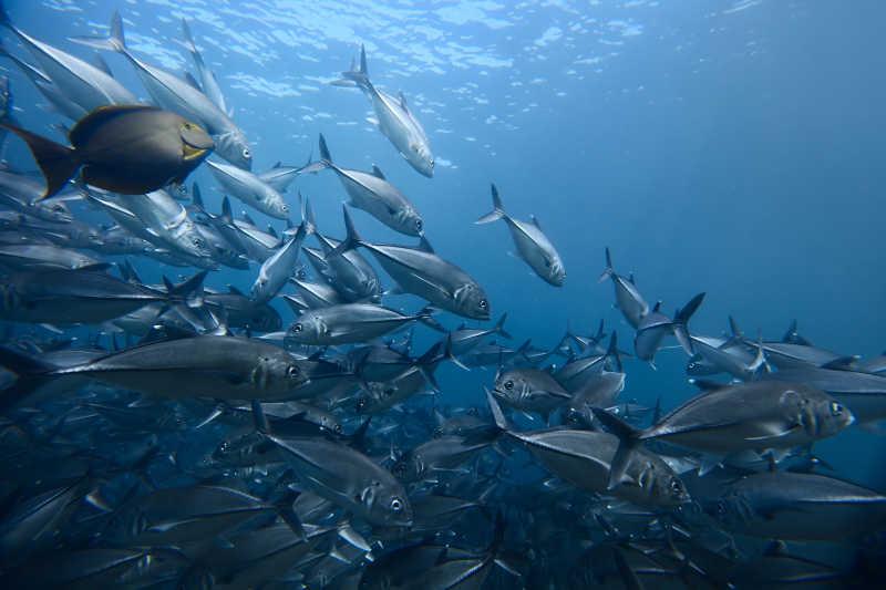 海底世界的鱼群