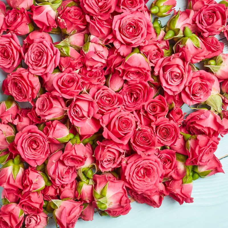 花朵图片素材_玫瑰紫色背景背景图案_jpg格式-未来素材
