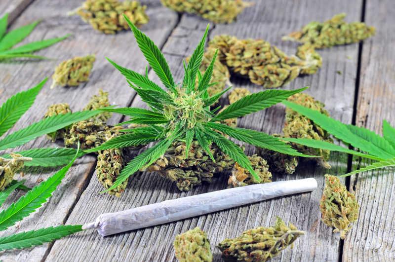 白色背景下的大麻芽干图片素材_大麻照片_jpg格式