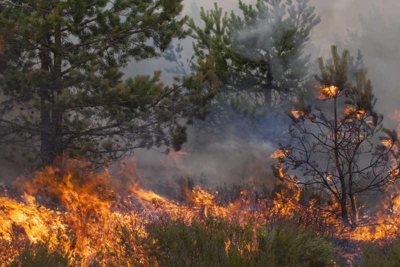 突发的森林火灾