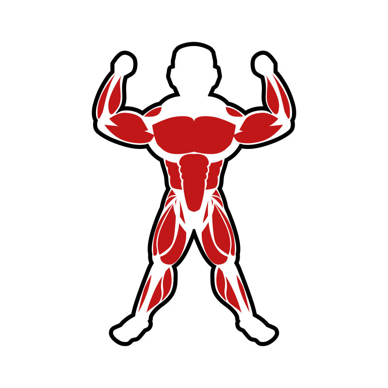 胳膊上的肌肉轮廓矢量设计图片素材_人胳膊上的肌肉
