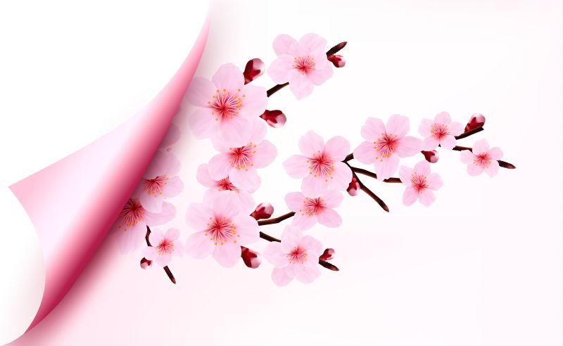 矢量的粉色桃花