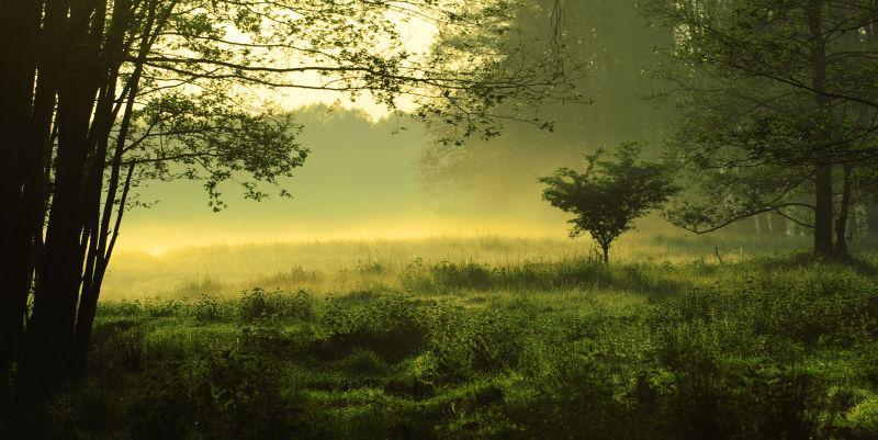 绿色森林里的雾景