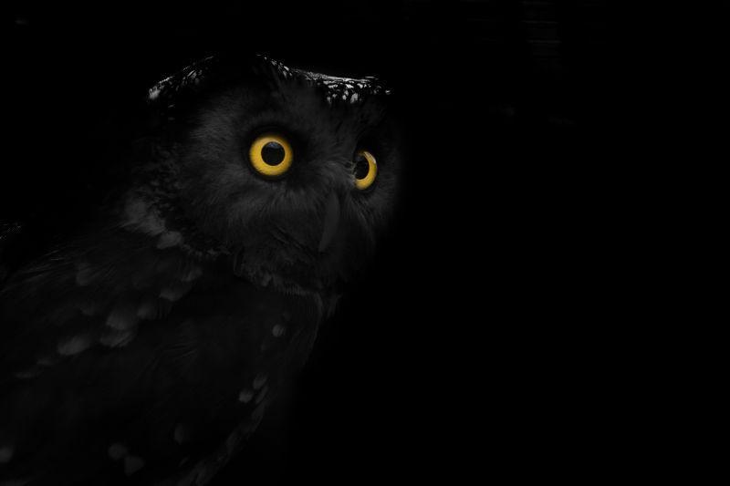 黑色背景中睁大橙色眼睛的猫头鹰