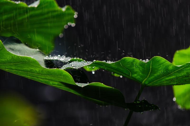 叶子上的水滴