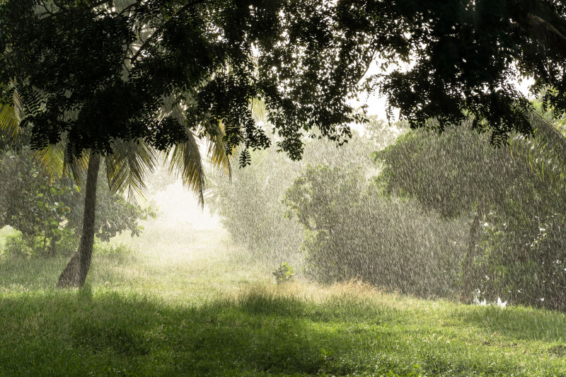 下雨中的热带雨林