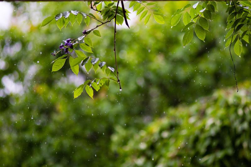 树叶与雨珠