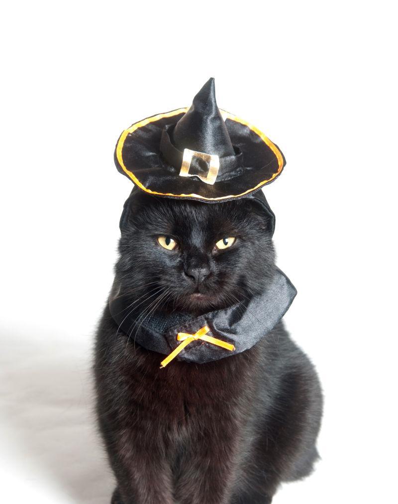 带着巫师帽的黑色猫咪