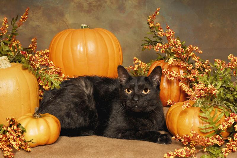 黑猫与周边的南瓜