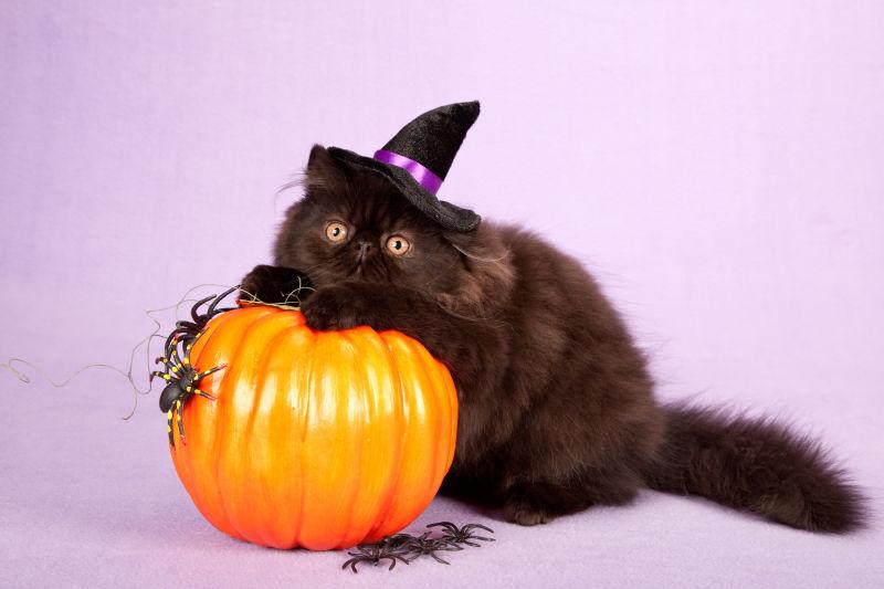 趴在南瓜灯上的黑猫