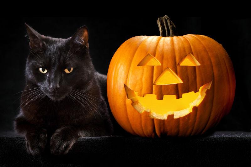 黑色猫与边上的南瓜灯
