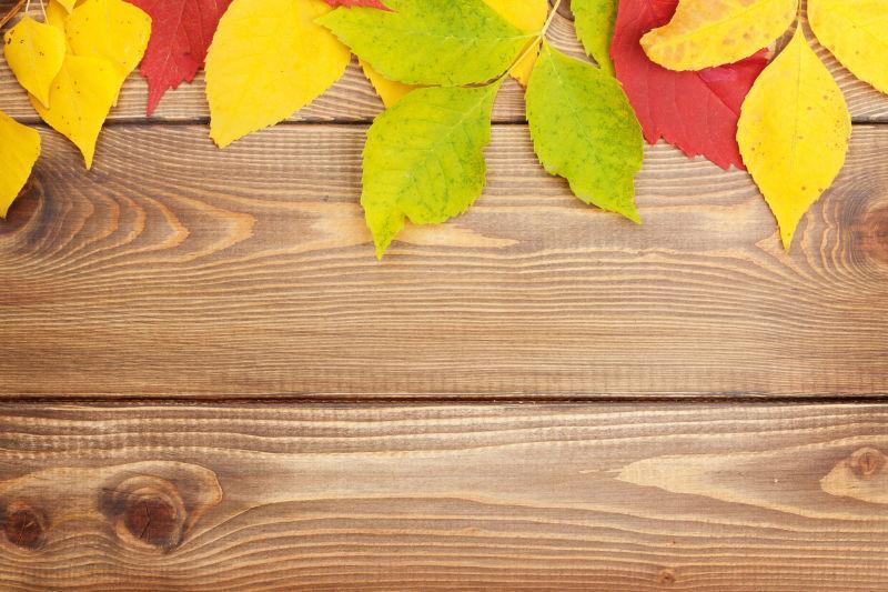 木板上的绿色黄色红色的树叶