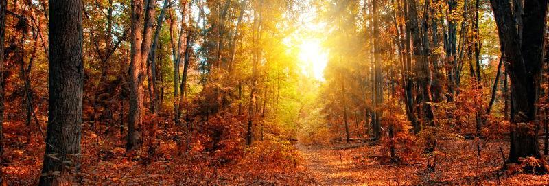 阳光穿透秋天的落叶森林
