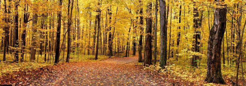 秋季森林全景