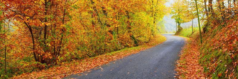 秋季森林里的公路