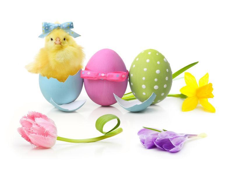 复活节彩蛋小鸡和花