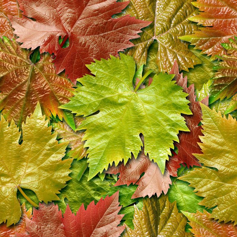 落在地上的枫叶