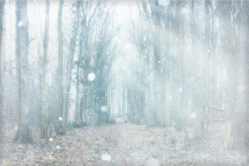 起雾的森林