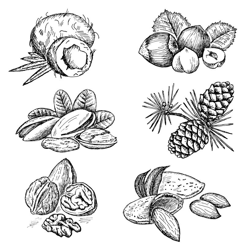 矢量创意手绘坚果设计插图