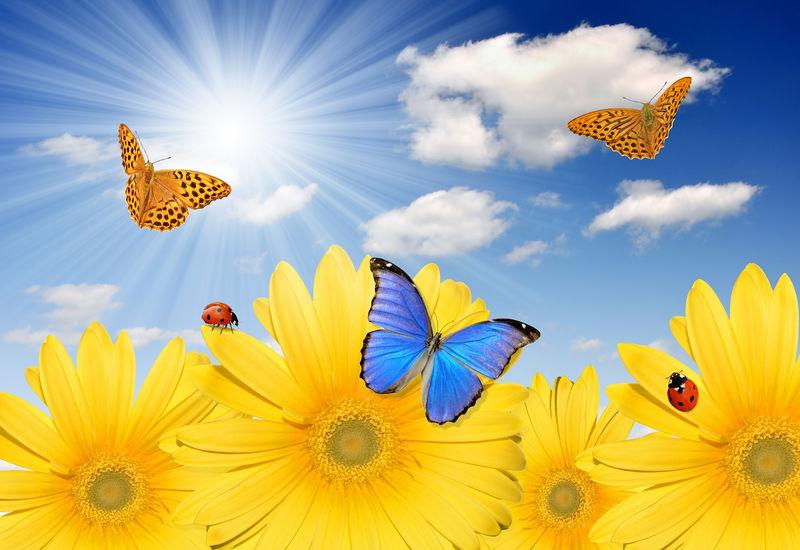 带蝴蝶和瓢虫的黄色非洲菊