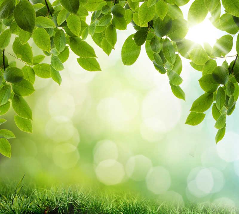 绿色树叶和草地背景