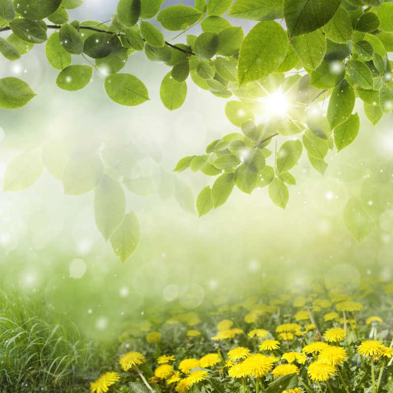 清新的春季绿色背景