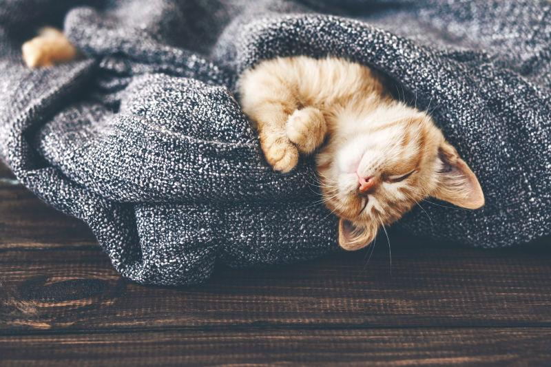 在毯子里睡觉的可爱猫咪