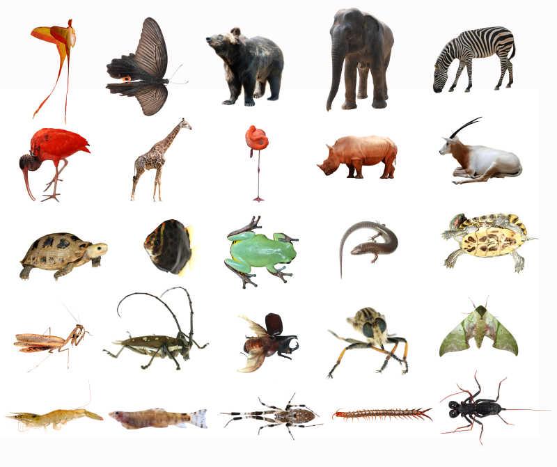 白色背景上的各种动物昆虫