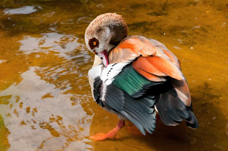 老鹰飞翔素描图片_鸟类-图片素材-高清图片素材-寻图